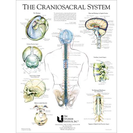 Cranio Sacral System Therapy in Grand Rapids MI